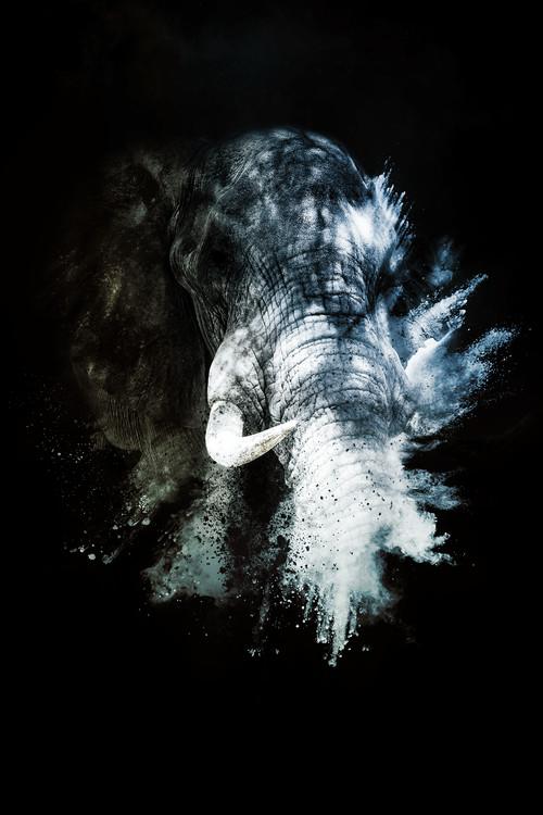 Exklusiva konstfoton The Elephant II