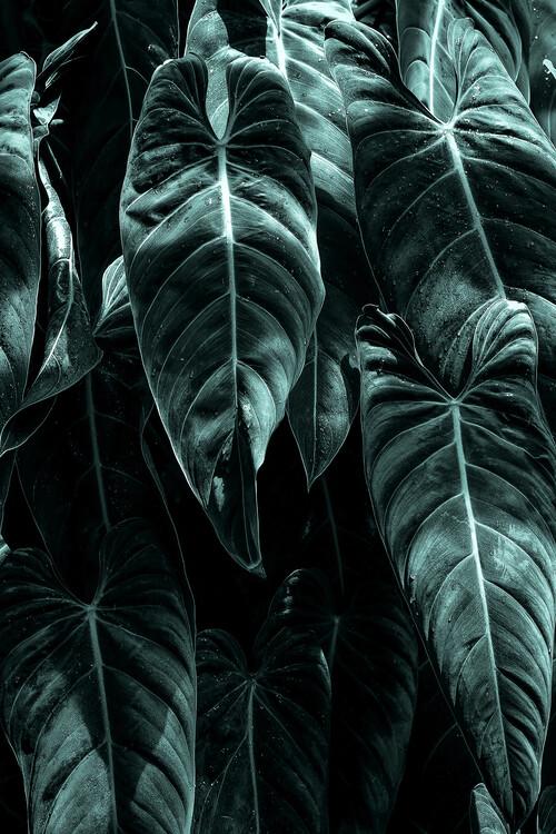Exklusiva konstfoton The Jungle