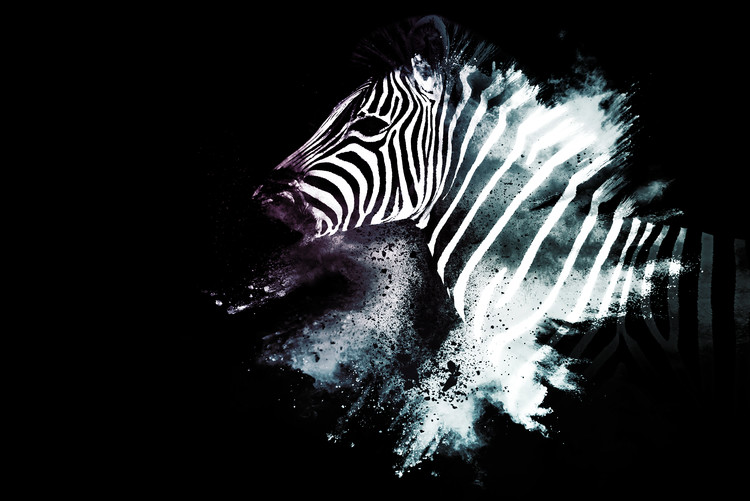 Exklusiva konstfoton The Zebra