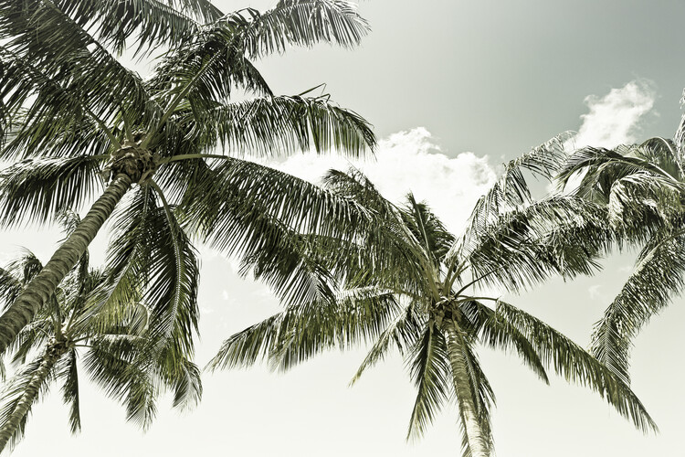 Exklusiva konstfoton Vintage Palm Trees