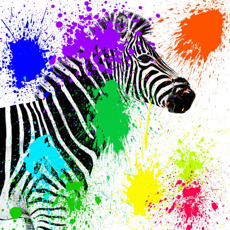 Exklusiva konstfoton Zebra Profile