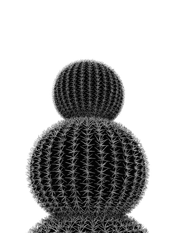 Exklusiva konstfoton BLACKCACTUS5