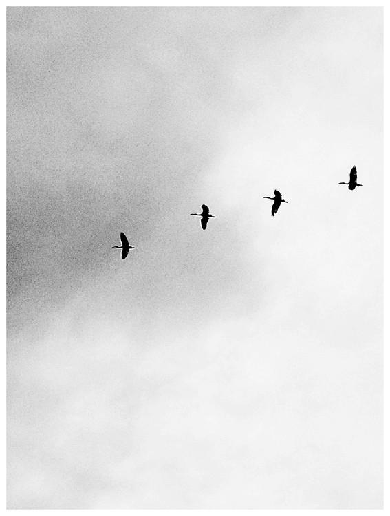 Exklusiva konstfoton Border four birds