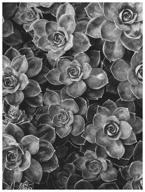Exklusiva konstfoton border succulent