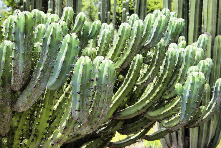 Exklusiva konstfoton Cactus Details