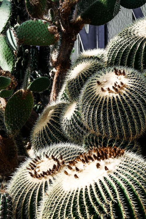 Exklusiva konstfoton Cactus