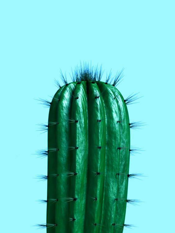 Exklusiva konstfoton cactus1