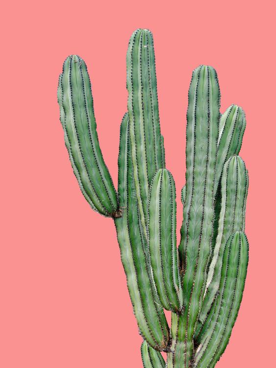 Exklusiva konstfoton cactus6