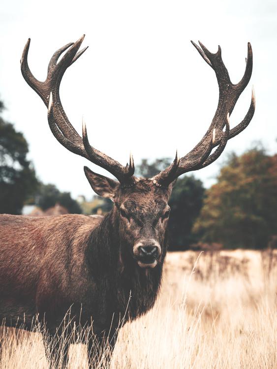 Exklusiva konstfoton Deer2