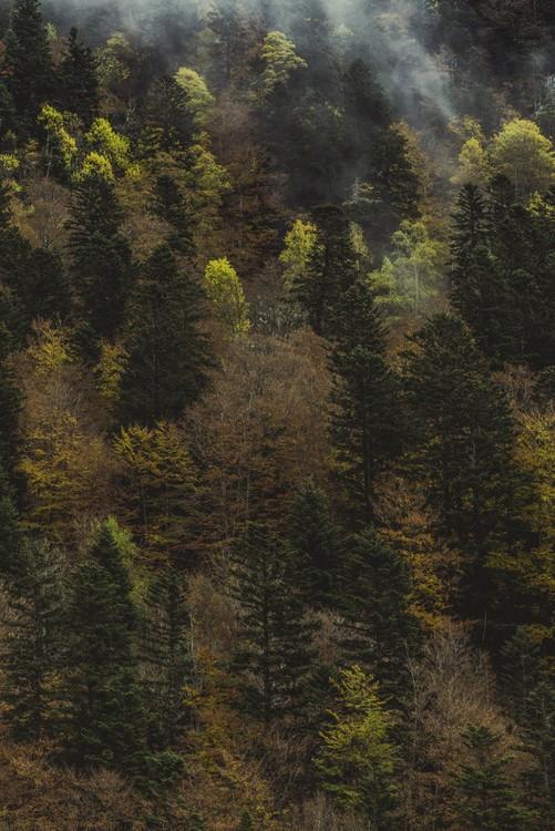 Exklusiva konstfoton Fall trees and fog