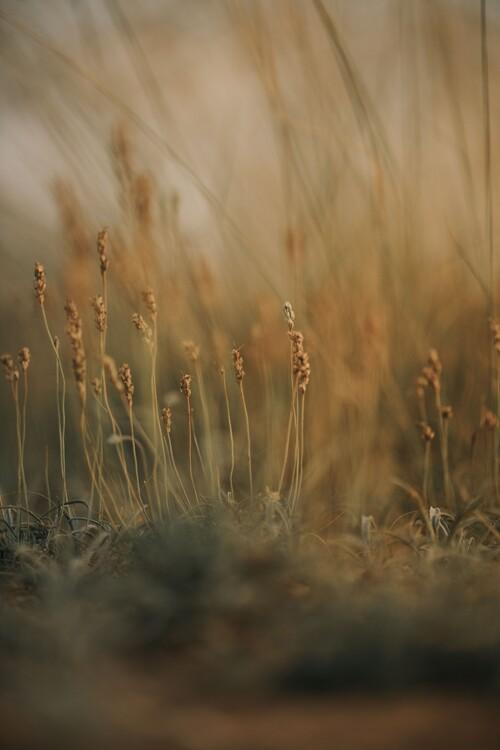 Exklusiva konstfoton Field at golden hour 2