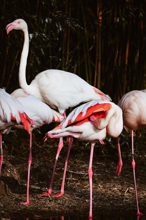 Exklusiva konstfoton Flamingo Budies