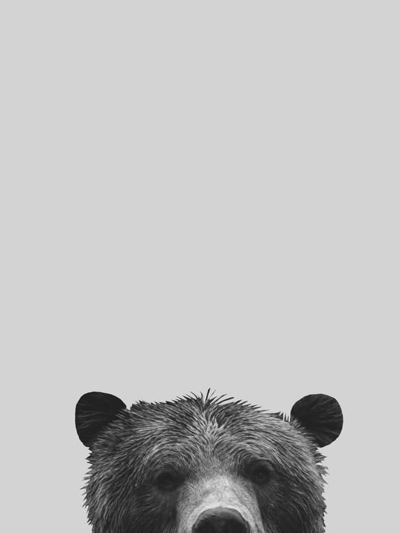 Exklusiva konstfoton Grey bear