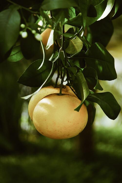 Exklusiva konstfoton Lemontree