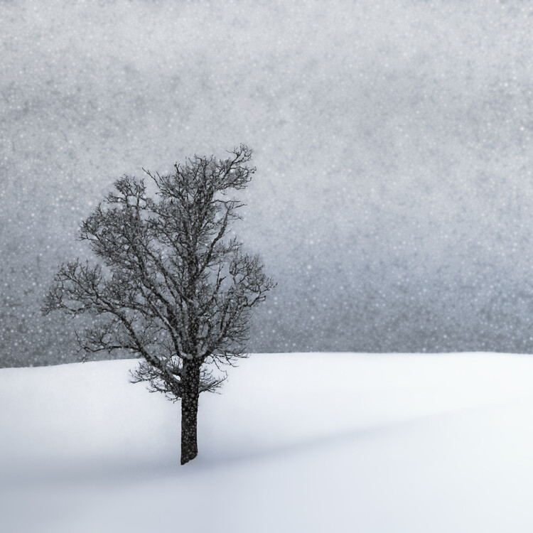 Exklusiva konstfoton LONELY TREE Idyllic Winterlandscape