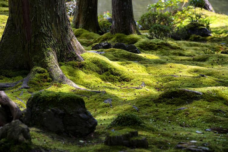 Exklusiva konstfoton Moss Garden