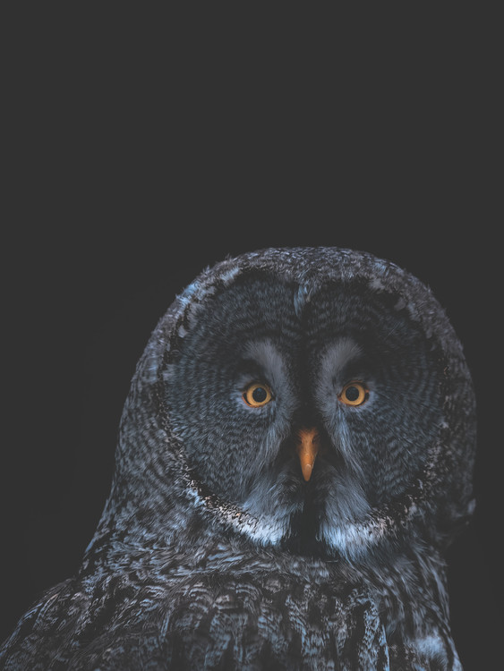 Exklusiva konstfoton owl1