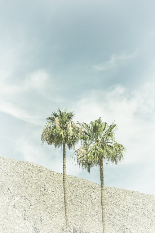 Exklusiva konstfoton Palm Trees in the desert   Vintage