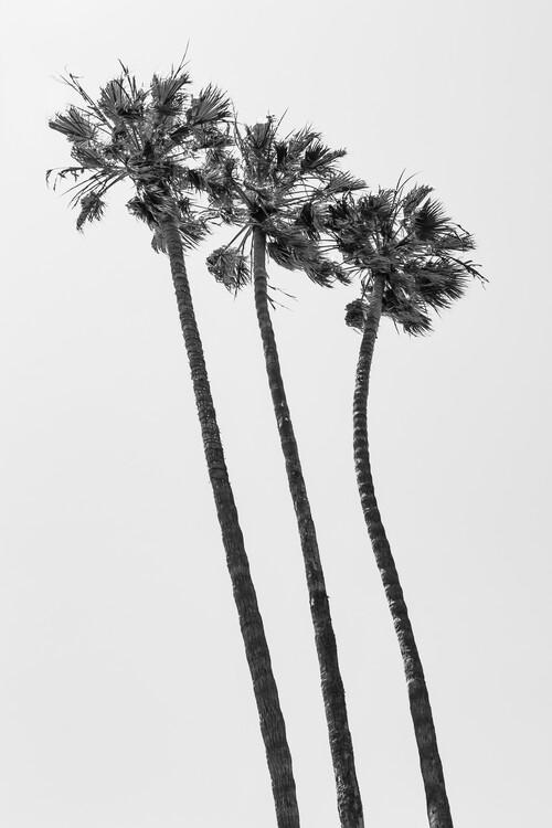 Exklusiva konstfoton Palm Trees Summertime