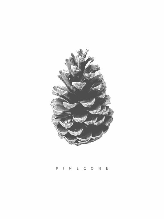 Exklusiva konstfoton pinecone