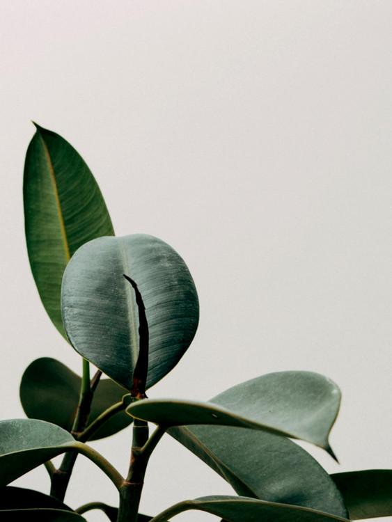 Exklusiva konstfoton plant leaf
