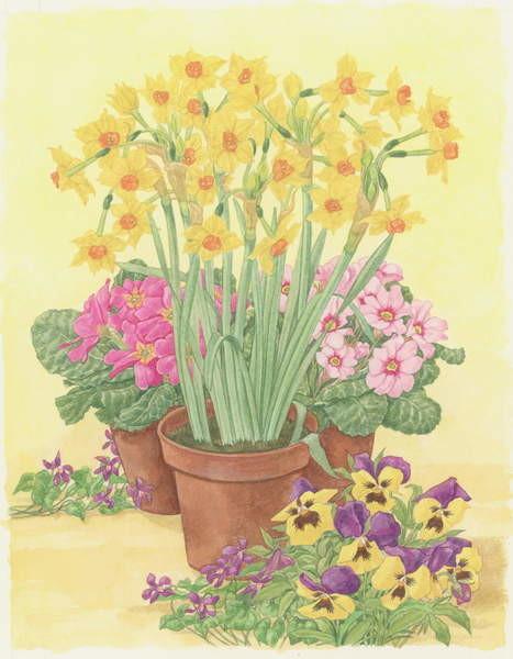 Canvastavla Pots of Spring Flowers, 2003