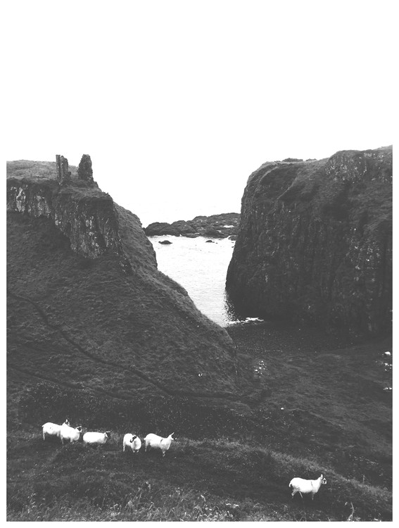 Exklusiva konstfoton sheep hills