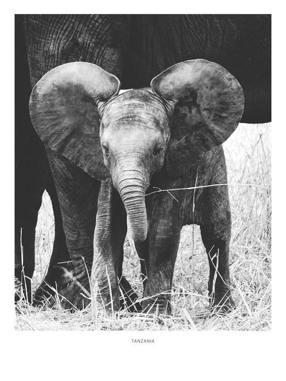 Exklusiva konstfoton Tanzania6