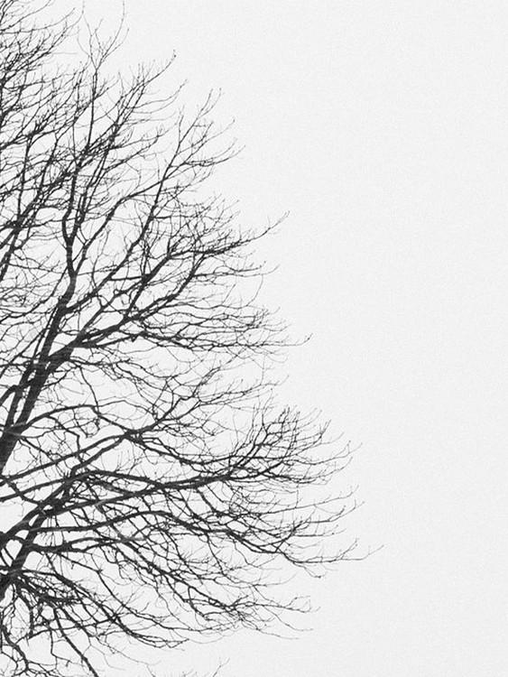 Exklusiva konstfoton tree1