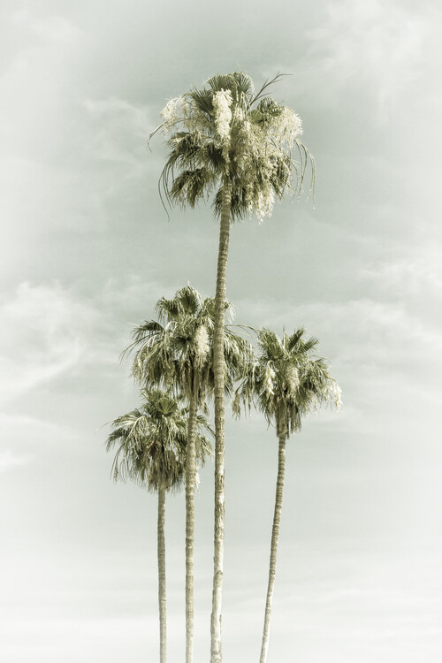 Exklusiva konstfoton Vintage Palm Trees Skyhigh
