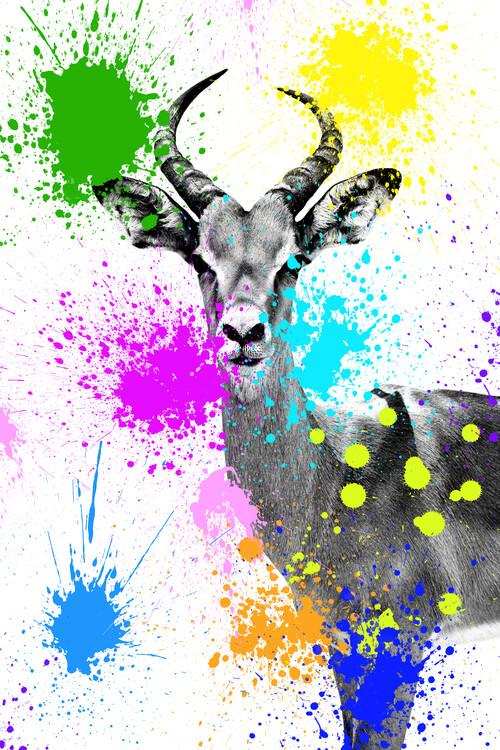 Exkluzív Művész Fotók Antelope Reedbuck