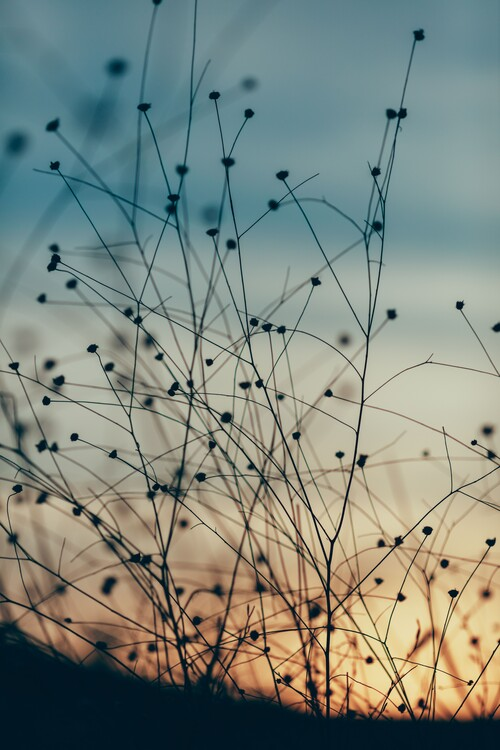Exkluzív Művész Fotók Plants and flowers at golden hour