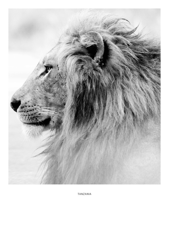 Exkluzív Művész Fotók tanzania4