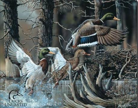 Fém tábla DU - beaver pond