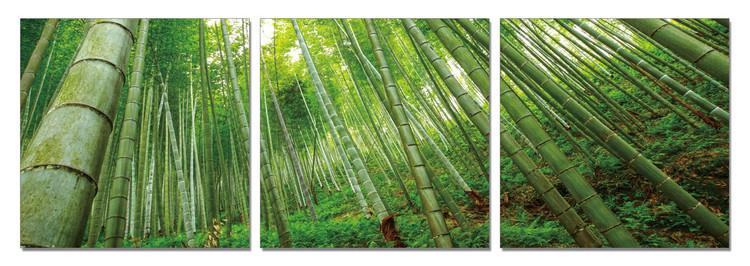 Bamboo Forest Modern kép