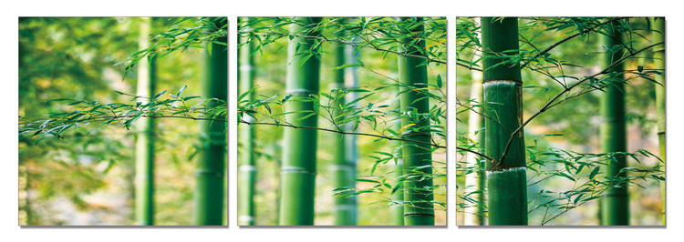 Bamboo Forest - Leaves modern festmény