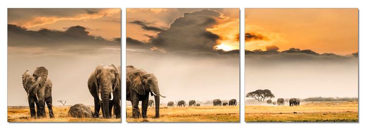 Elephants - Plains of Africa Modern kép