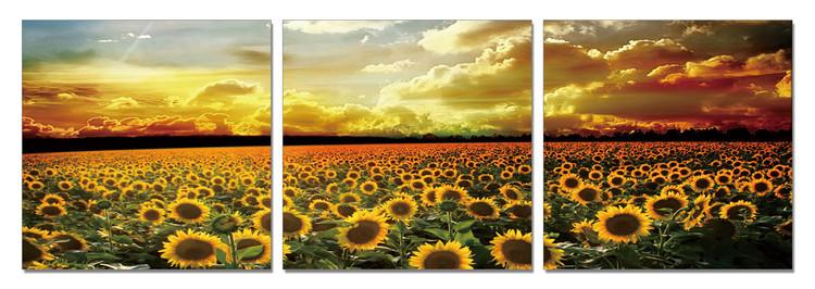 Sunflower Field modern festmény