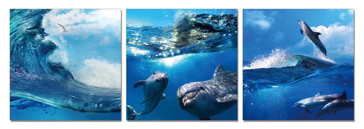 World of Dolphins Modern kép