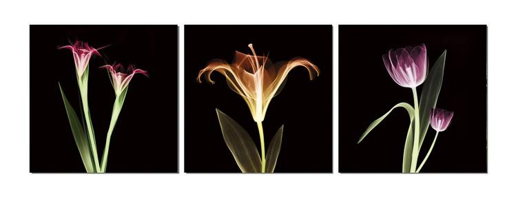 Flowers - X-Ray Schilderij