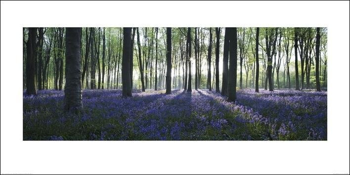 Forêt - Blue Reproduction d'art