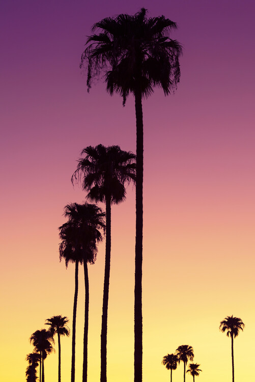 American West - Sunset Palm Trees Fotobehang