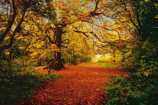 AUTUMN FOREST Fotobehang