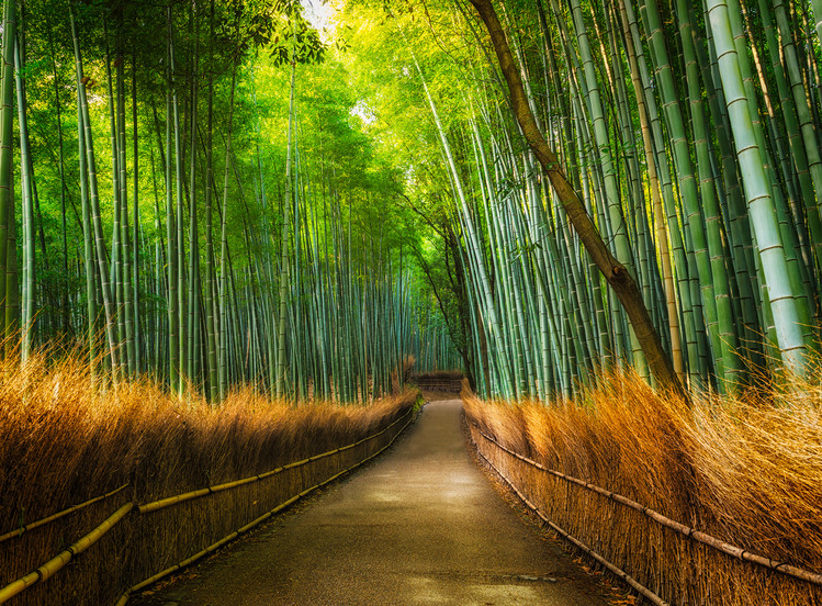 Bamboo - Path in the Forest Fotobehang