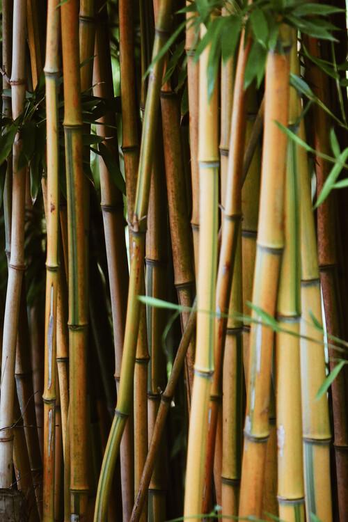 Bamboo wall Fotobehang
