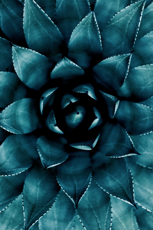 Cactus No 9 Fotobehang