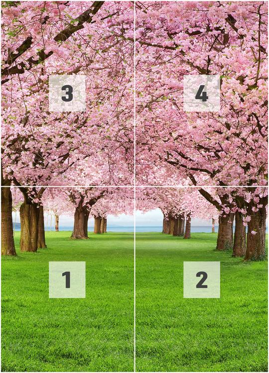 CHERRY TREES Fotobehang