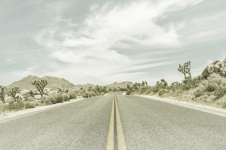 Country Road with Joshua Trees Fotobehang