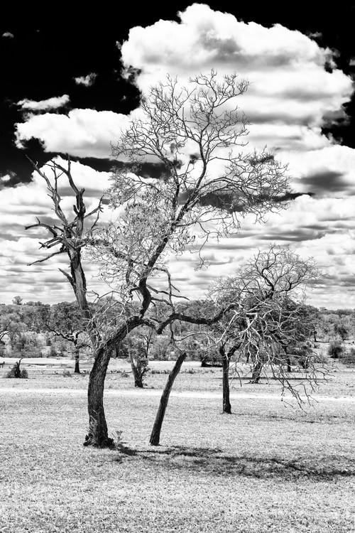 Dead Tree in the African Savannah Fotobehang