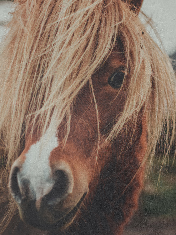 fadedhorse1 Fotobehang